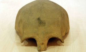 If not too morbid, a photo of a cast of Bede's skull made in 1831 and found at Cambridge University in 2015.